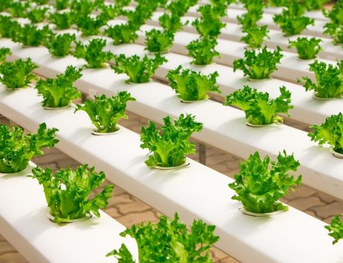 The Benefits of Hydroponics Over Traditional Gardening